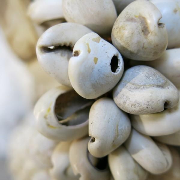 gemuscheltes