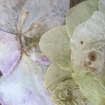 METAMORPHOSE einer Orchidee